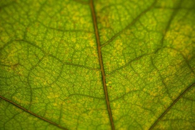 Vooraanzicht groen blad plant boom kleurenfoto