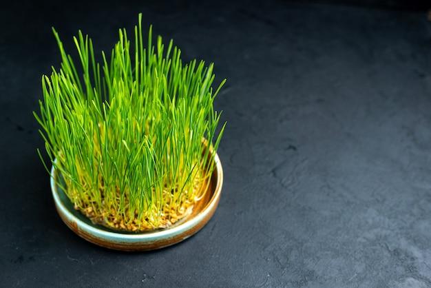 Vooraanzicht groene vakantie semeni op donkere ondergrond