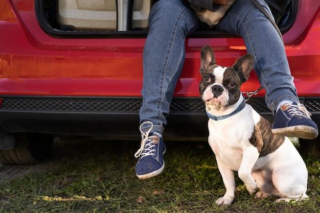 Vooraanzicht hond zit naast de auto