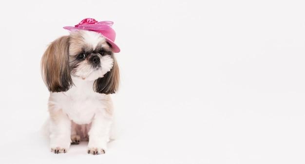 Vooraanzicht kleine hond met hoed