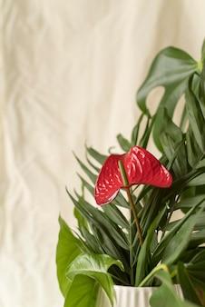 Vooraanzicht minimale tropische plantensamenstelling