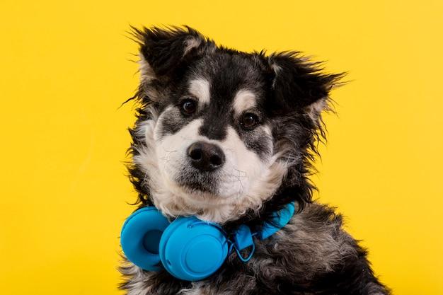Vooraanzicht pluizige hond met koptelefoon