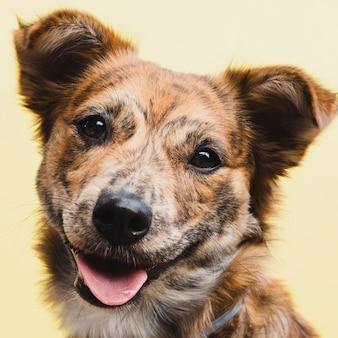 Vooraanzicht schattige binnenlandse hond huisdier