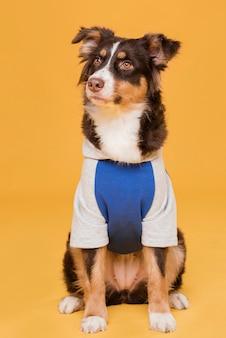 Vooraanzicht schattige hond in kostuum