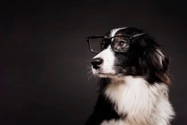 Vooraanzicht schattige hond met een bril