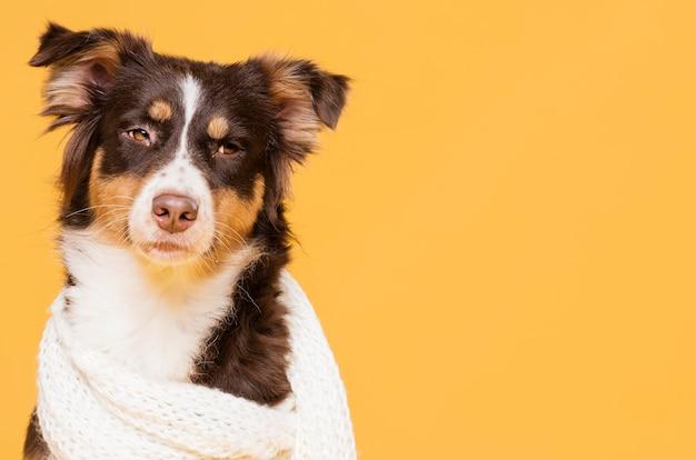 Vooraanzicht schattige hond met een sjaal