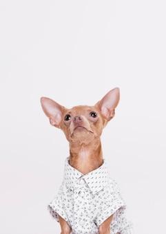 Vooraanzicht schattige hond met shirt