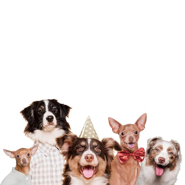 Vooraanzicht schattige honden in kostuums
