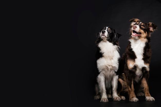 Vooraanzicht schattige honden