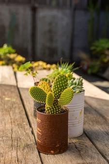 Vooraanzicht schattige planten in potten