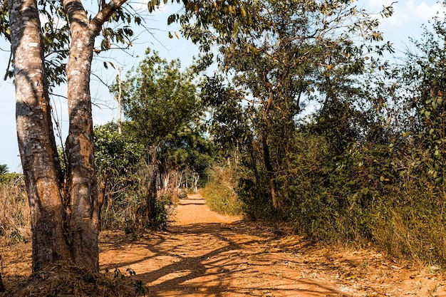 Vooraanzicht van afrikaans natuurlandschap met bomen en vegetatie