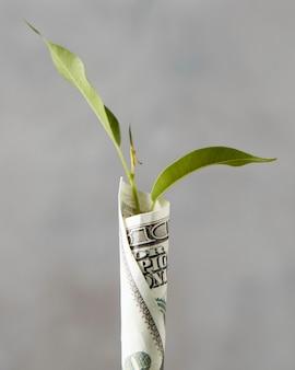 Vooraanzicht van bankbiljet gewikkeld rond plant