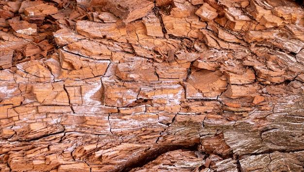 Vooraanzicht van de textuur van de boomschors