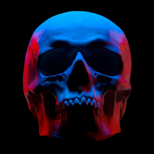 Vooraanzicht van gipsmodel van de menselijke schedel in neonlichten die op zwarte achtergrond met het knippen van weg worden geïsoleerd