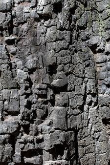 Vooraanzicht van het oppervlak van de boomschors