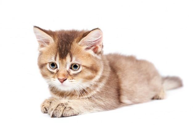 Vooraanzicht van liggende kitten geïsoleerd op wit.