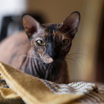Vooraanzicht van mooi kattenconcept Gratis Foto