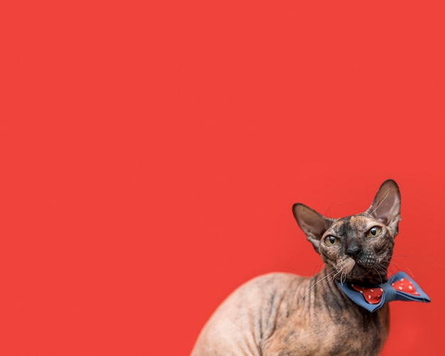 Vooraanzicht van mooi kattenconcept Premium Foto