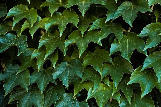 Vooraanzicht van mooie bladeren