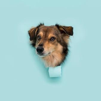 Vooraanzicht van mooie hond met exemplaarruimte