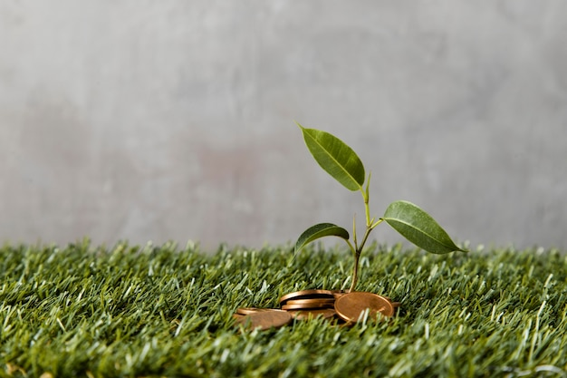 Vooraanzicht van munten op gras met plant