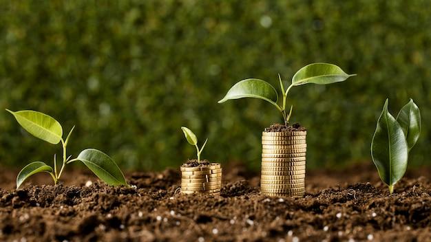 Vooraanzicht van planten met munten gestapeld op vuil