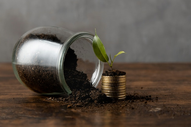 Vooraanzicht van pot met vuil en gestapelde munten met plant