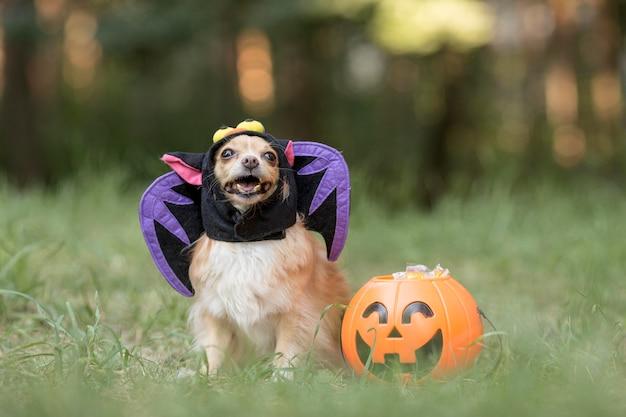 Vooraanzicht van schattige hond in vleermuiskostuum