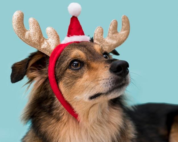 Vooraanzicht van schattige hond met kerst concept