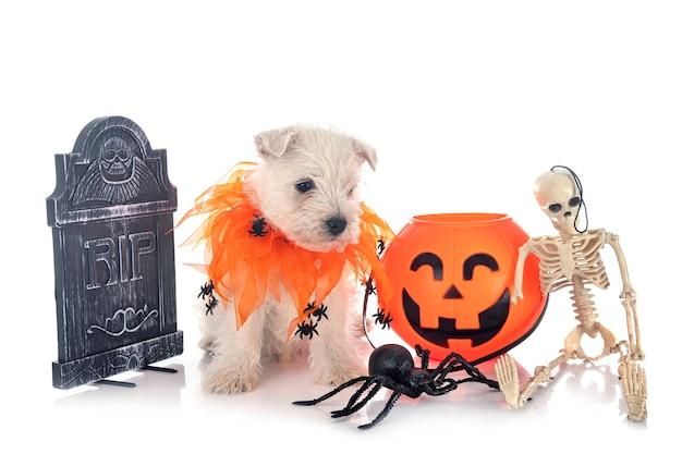 Vooraanzicht van wit terriërpuppy met halloween-decoratie