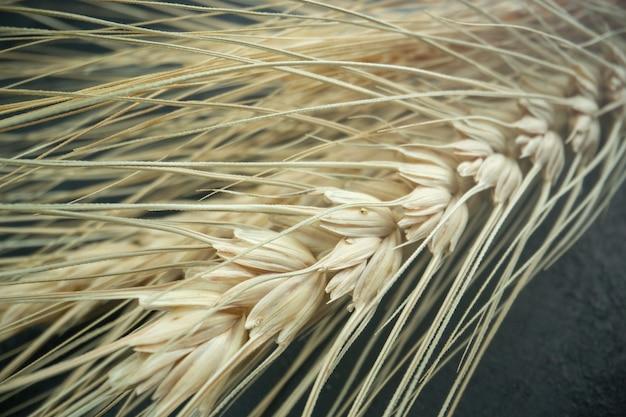 Vooraanzicht verse tarwe op donkere broodplant kleurenfoto