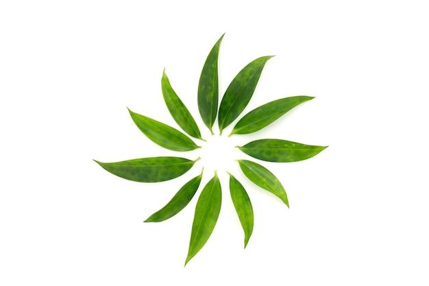 Voorbeeld van plantenziekten met cirkel vlekken op het blad zijn in de cirkellijn gerangschikt als een bloemvorm op wit