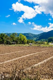 Voorbereiding van de grond voor de teelt van aardbeien