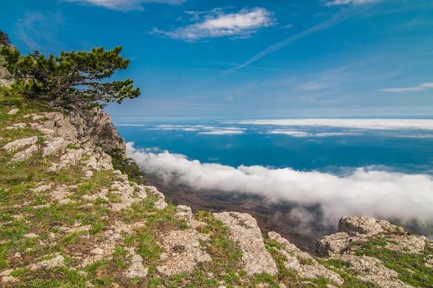 Voorgrond enorme steen bedekt met mos en bomen aan de kant van de berg