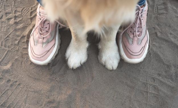 Voorhondenpoten en vrouwenvoeten in trainers op zandbovenaanzicht