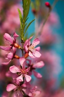 Voorjaarsbloeiende takken, roze bloemen
