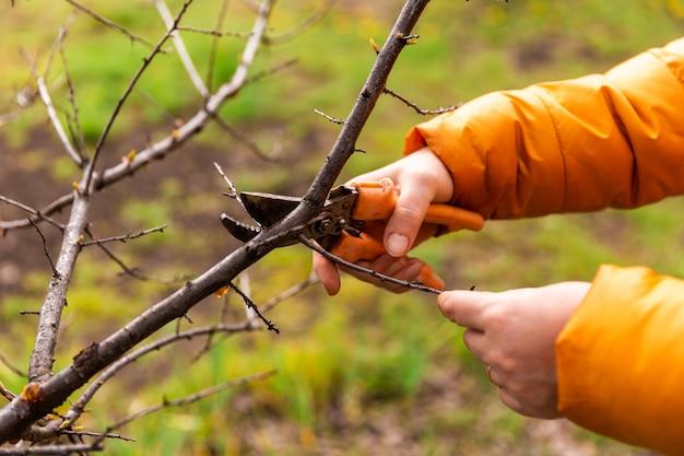 Voorjaarssnoeien van boomtakken en struiken