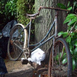 Vooroorlogse somme bicyclette - somme-cyclus w, draad