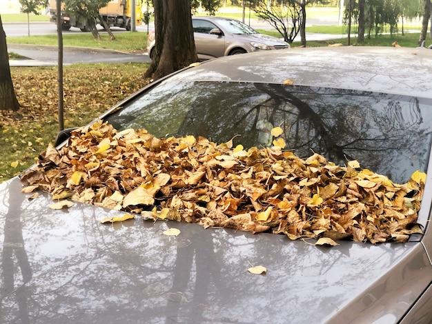 Voorruit en motorkap bedekt met gele herfstbladeren. herfst concept.