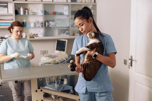 Voorzichtige aziatische dame houdt schattige kat vast terwijl collega ultrasone machine voorbereidt in kliniek