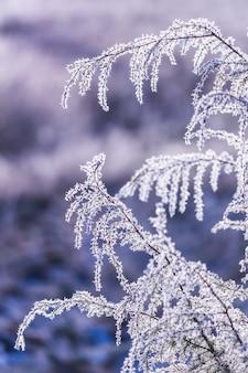 Vorst op een tak, mooie winterbriefkaart