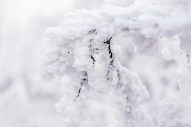 Vorst op takken. takje bedekt met rijm, close-up. mooie winter seizoensgebonden natuurlijke achtergrond. winterlandschap bevroren boomtak.