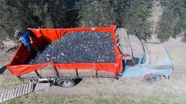 Vrachtwagen oogst fijne druivenoogst