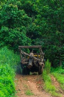 Vrachtwagens voor de bosbouwindustrie.