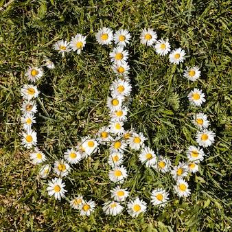 Vredessymbool van madeliefjesbloem