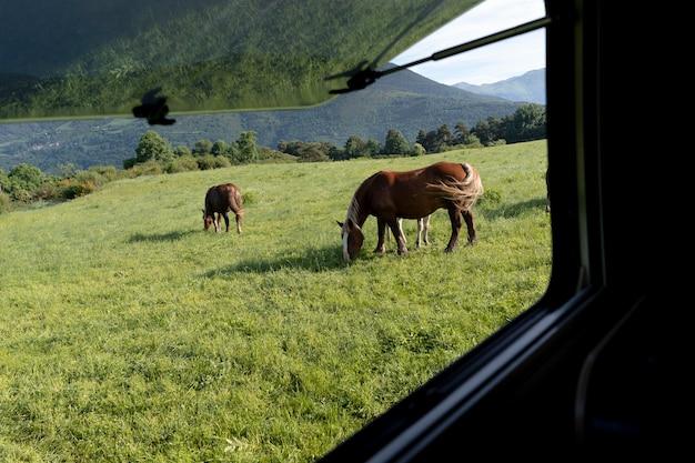 Vreedzame schattige paarden in de natuur