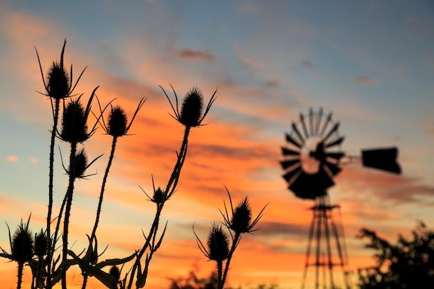 Vreedzame zonsondergang op het platteland