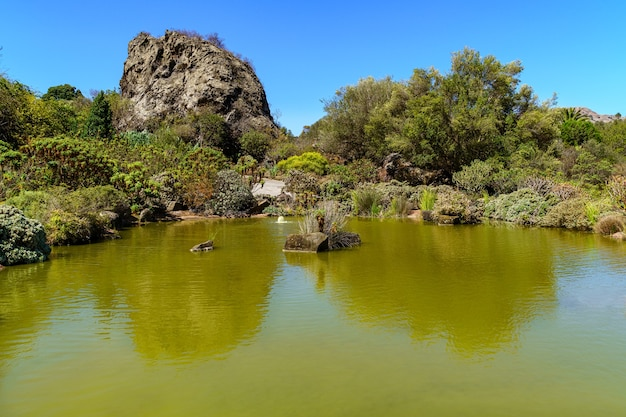 Vreemd groen meer met rotsen en planten op het eiland gran canaria. spanje.
