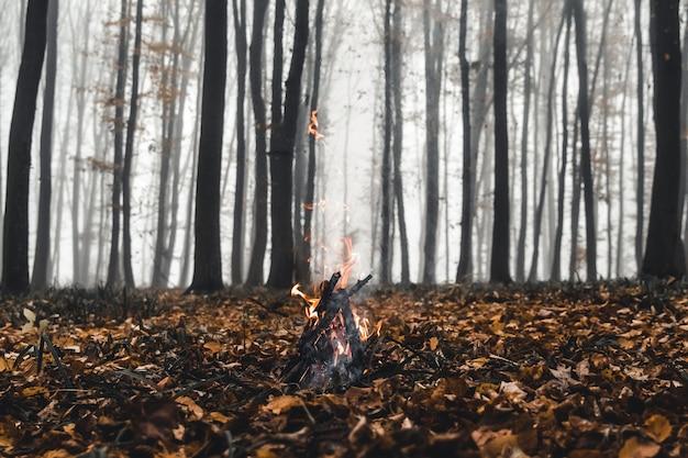 Vreugdevuur in het bos in de avond