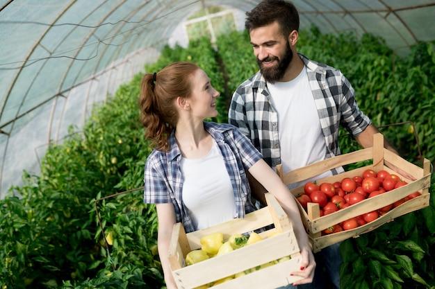 Vriendelijk team dat verse groenten oogst uit de kastuin en het oogstseizoen